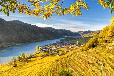 CLKMK98397 Weissenkirchen in der Wachau, Wachau, Waldviertel, district of Krems, Lower Austria, Austria, Europe. View from the vineyards to the village of Weissenkirchen in der Wachau