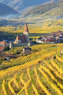 CLKMK98403 Weissenkirchen in der Wachau, Wachau, Waldviertel, district of Krems, Lower Austria, Austria, Europe. View from the vineyards to the village of Weissenkirchen in der Wachau