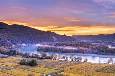 CLKMK98823 Weissenkirchen in der Wachau, Wachau, Waldviertel, district of Krems, Lower Austria, Austria, Europe. Sunrise in the vineyards near Weissenkirchen in der Wachau, view to the Danube river and the villa...