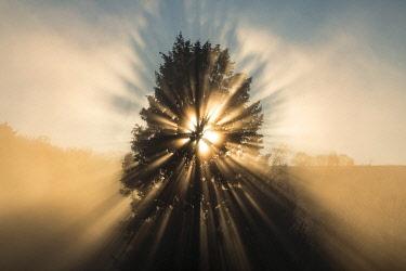 FRA11091AW France, Correze, sun's rays shing through a tree on a foggy day