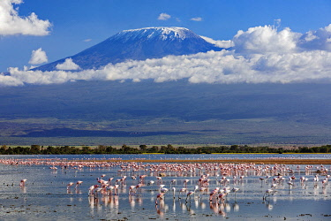 KEN11420 Kenya, Amboseli, Kajiado County.  Snow-capped Mount Kilimanjaro, Africa's highest mountain, with flocks of flamingos in the foreground.
