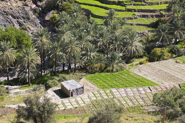 OMA2881AW Oman, Dakhiliyah Governate, Jebel Hajar, Balad Sayt (Bilad Sayt). A grass hut in the remote village of Bilad Sayt surrounded by green terraces and palm trees  lies deep in the Jebel Hajar.