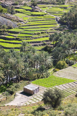 OMA2882AW Oman, Dakhiliyah Governate, Jebel Hajar, Balad Sayt (Bilad Sayt). A grass hut in the remote village of Bilad Sayt surrounded by green terraces and palm trees  lies deep in the Jebel Hajar.
