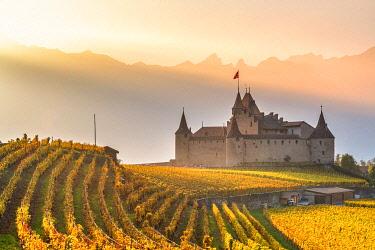 CLKAC99581 Aigle Castle, Aigle, Canton of Vaud, Switzerland, Europe