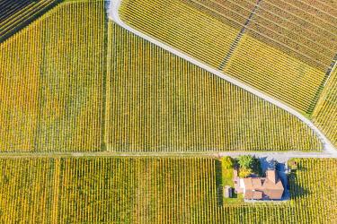 CLKAC99596 Vineyards of Aigle, Aigle, Canton of Vaud, Switzerland, Europe