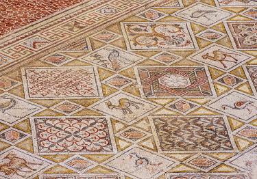 JOR0813AW Mosaic Floor in Jerash, Jerash Governorate, Jordan