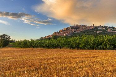 ITA13701AWRF Italy, Umbria, Perugia district, Trevi.