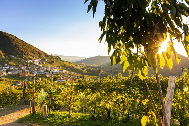 Italy, Veneto. Prosecco Road. Treviso district. Follo, vineyards of Prosecco.