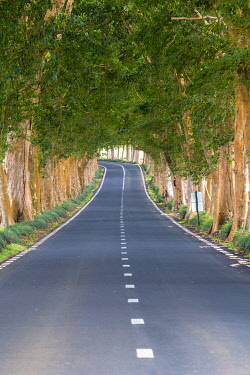 CLKAC102987 Tree-lined road, Grand Port district, Mauritius, Africa