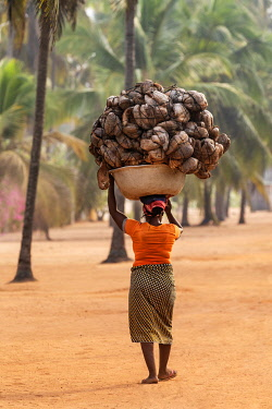 BNN0190 Benin, Grand Popo, Mono Department.  A woman carries a large headload of coconut husks through coconut palms beside Grand Popo beach.