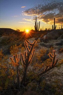 MEX1898AW Central America, Mexico, Baja, Baja California, Sur, Catavina sunset