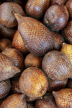 IDA0912AW Asia, Southeast Asia, Indonesia, Maluku, Seram island, Salak or snake fruit (Salacca zalacca) a fruit from a species of palm tree in the family Arecaceae
