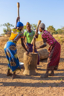 BNN0410AW Africa, Benin, Kouaba. Fulani village, young women working with mortar and pestle.