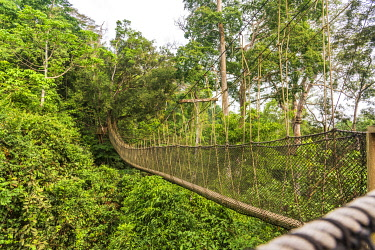 GHA0209AW Africa, Ghana, Kakum National Park. The canopy walkway.