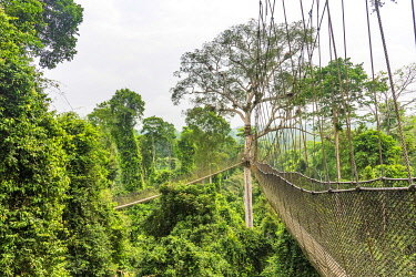 GHA0212AW Africa, Ghana, Kakum National Park. The canopy walkway.