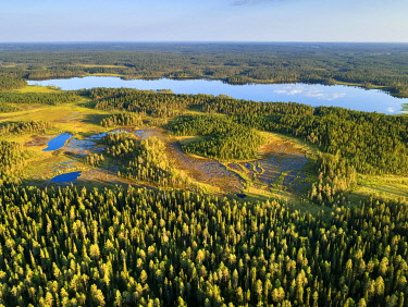 IBXGZS04808434 Drone shot, conifers in wetland with lake, boreal, arctic forest, Suomussalmi, Kainuu, Finland, Europe