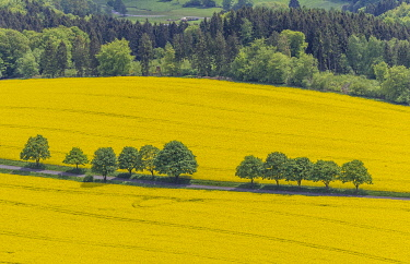 IBLBLO03576796 Aerial view, rape fields on a country road, near Breckerfeld, North Rhine-Westphalia, Germany, Europe
