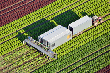 IBLHWE03727759 Lettuce harvest and processing, aerial view, Trittau, Schleswig-Holstein, Germany, Europe