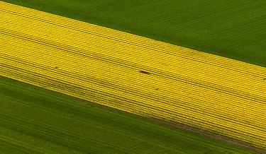 IBLBLO03731917 Tulip fields, aerial view, Zuidoost-Beemster, Beemster, province of North Holland, The Netherlands, Europe