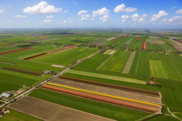 IBLBLO03731921 Tulip fields, aerial view, Noord-Beemster, Beemster, province of North Holland, The Netherlands, Europe