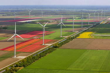 IBLBLO03731983 Wind turbines, tulip fields, aerial view, Zeewolde, Flevoland, The Netherlands, Europe