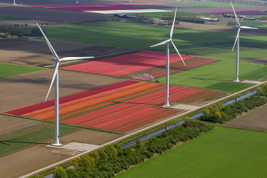IBLBLO03731984 Wind turbines, tulip fields, aerial view, Zeewolde, Flevoland, The Netherlands, Europe