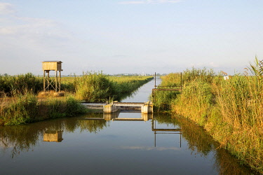 IBXTDR04803324 Typical landscape of the Ebro Delta with canals, lock-gate, reed and rice fields, on the left a box for bats, behind the village of Poble Nou del Delta, Ebro Delta Nature Reserve, Tarragona province,...
