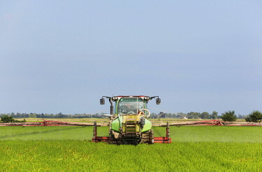 IBLTDR04803506 A tractor sprays a fungicide onto the rice fields (Oryza sativa), in July, environs of the Ebro Delta Nature Reserve, Tarragona province, Catalonia, Spain, Europe