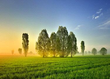 IBLAVI04809903 Morning atmosphere in Unstrut Valley, poplars on green meadows, morning fog, Freyburg (Unstrut), Saxony-Anhalt, Germany, Europe