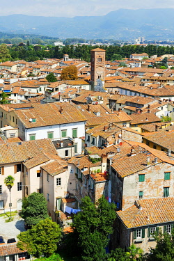 IBLDWB01888721 View from Torre Palazzo Guinigi tower, Lucca, Tuscany, Italy, Europe