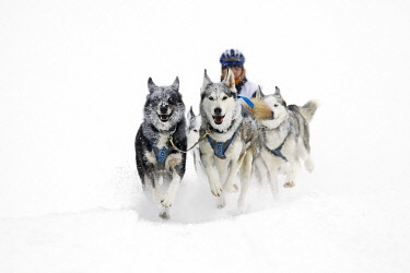 IBLJFI03817213 Alpine Trail Sled Dog Race 2013, Huskies, Prato Piazza alpine meadow, Fanes-Sennes-Prags Nature Park, Prags, Dolomites, Alto Adige, Italy, Europe