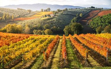 ITA13754AW Sagrantino di Montefalco Vineyards in autumn, Umbria, Italy