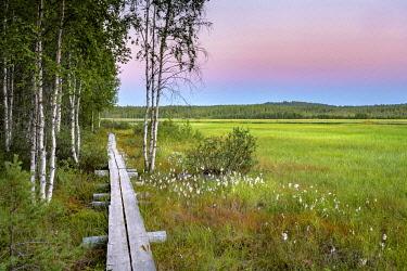 IBXGZS04798939 Sunset, wooden footbridge in wetland, moor with deciduous trees, birches and cotton grass, Ruhtinansalmi, Lapland, Finland, Europe