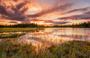 IBXGZS04808415 Sunset, orange clouds reflected in the lake, forest, wetland, moor, Kittilä, Lappi, Finland, Finland, Europe