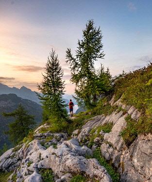 IBXMAB04808612 Hiker stands between two Larches (Larix), summit of Feldkogel, mountain landscape, view of Königssee at sunset, left Watzmann Südspitze and Watzmannkinder, national park Berchtesgaden, Berchtesgaden...
