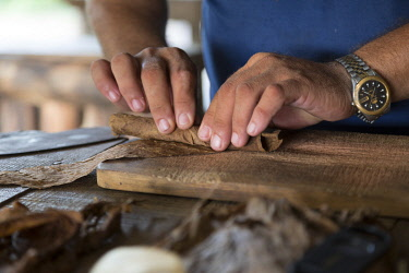 CLKNO101030 Specialized craftsman makes cigars by rolling tobacco leaves in Vinales, Pinar del Rio Province, Cuba