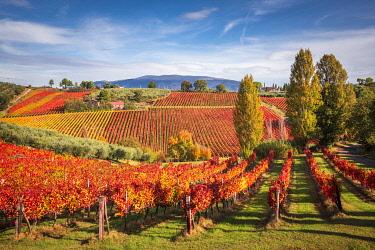 CLKST99442 Montefalco Sagrantino vineyards, Montefalco, Perugia province, Umbria, Italy