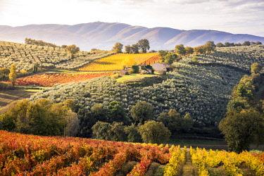 CLKST99513 Sagrantino vineyards during autumn, Montefalco, Perugia province, Umbria, Italy