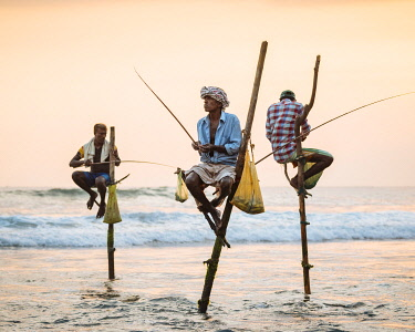 SRI2260AW Stilt Fishermen at dusk, Weligama, South Coast, Sri Lanka, Asia