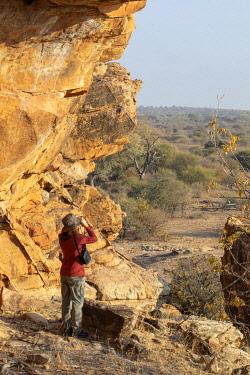 BOT5416 Woman on safari, surveying the dry savannah of Tuli Game Reserve with binoculars, Botswana