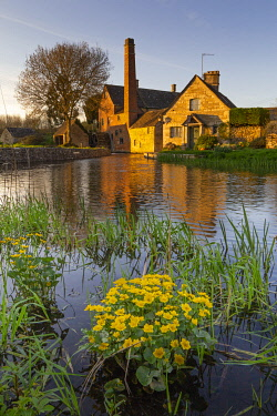 ENG16161 The water mill in the Cotswold village of Lower Slaughter, photographed during spring when marsh marigolds are in flower along the River Eye, Gloucestershire, England