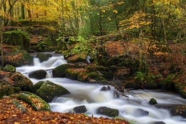 ENG16195 River flowing through autumn woodland, Kennall Vale Nature Reserve, Cornwall, England
