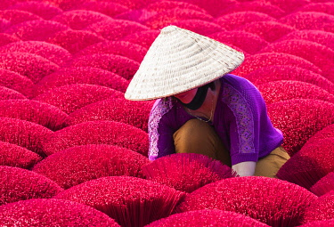 VIT1572AW A woman sorting out the incense sticks drying in the sun, Hung Yen province, Vietnam