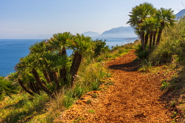 ITA13825AW Europe, Italy, Sicily. Landscape in the Nature Reserve of the Zingaro with its famous dwarf palms.