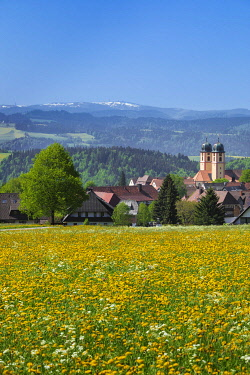 IBXMAL04859488 Blooming dandelion meadow in front of St.Maergen with monastery church in spring, behind the Feldberg mountain, Glottertal, Black Forest, Baden-Wurttemberg, Germany, Europe