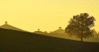IBXSHU04837037 Moraine landscape at sunset, with Linden trees (Tilia) on hill, Hirzel, Canton Zurich, Switzerland, Europe