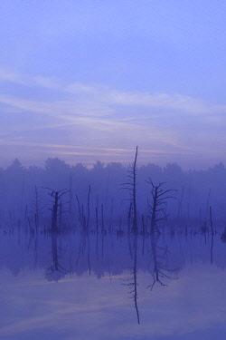 IBXTKE04830539 Schwenninger moss Nature Reserve, foggy atmosphere, Neckar Spring, Villingen-Schwenningen, Black Forest, Baden-Wurttemberg, Germany, Europe
