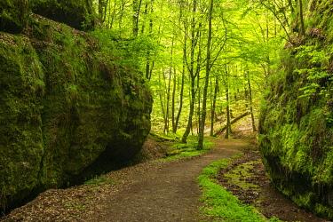 IBLAVI04829312 Hiking trail through the Landgrafen Gorge, rock walls with moss, Thuringian Forest, nature reserve Wartburg-Hohe Sonne, near Eisenach, Thuringia, Germany, Europe