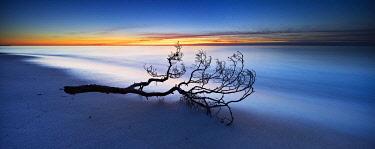 IBLAVI04862661 Fischland-Darss-Zingst, Baltic Sea, Western Pomerania Lagoon Area National Park, Mecklenburg-Western Pomerania, Germany