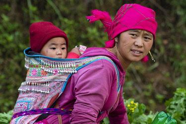 VIT1620AW Asia, Vietnam, Hoàng Liên Son Mountains, Sapa